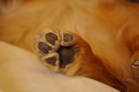 犬の足の画像